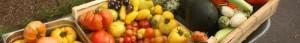 cropped-tomates-xxx-e1444067983606.jpg