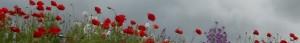 cropped-cropped-DSCN0071.jpg
