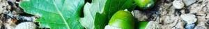 cropped-lutins-des-glands.jpg