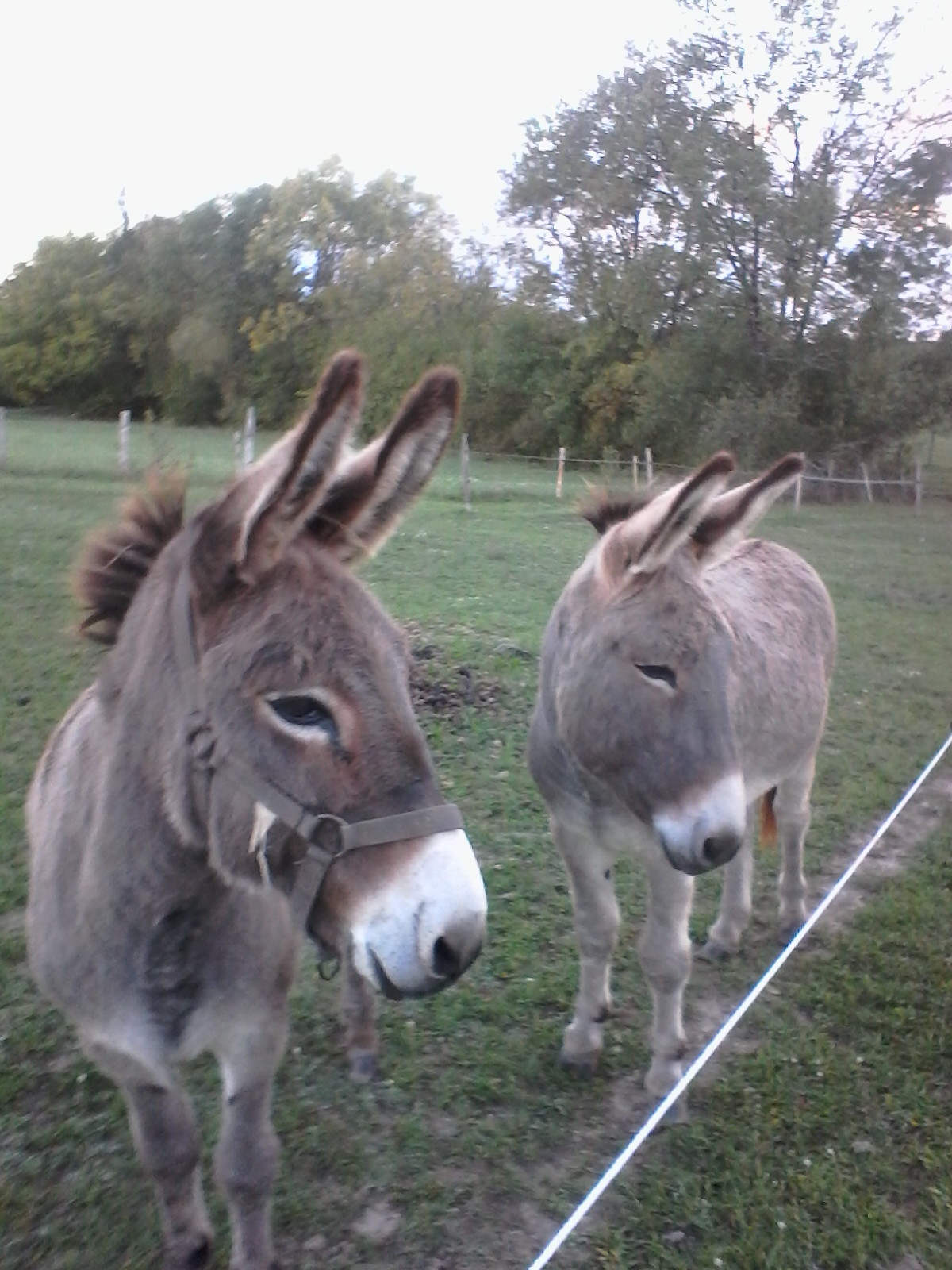 Justin Justine nos ânes à Cablanc